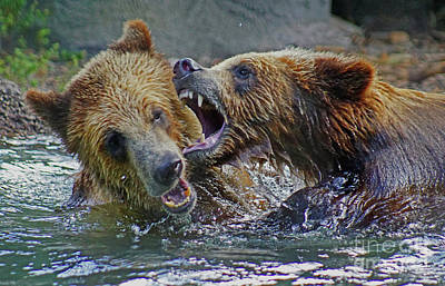 Photograph - When Grizzlies Play by Larry Nieland