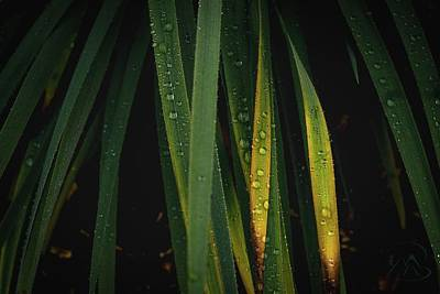 Photograph - When It Rains by Gene Garnace