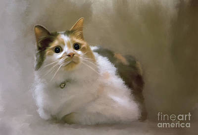 Digital Art - When Kitty Wants To Play by Lois Bryan