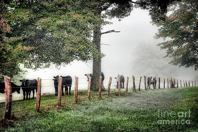 Photograph - When The Cows Come Home - Blue Ridge by Dan Carmichael