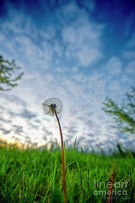 Photograph - When The Dandelion Ruled The Earth by David Arment