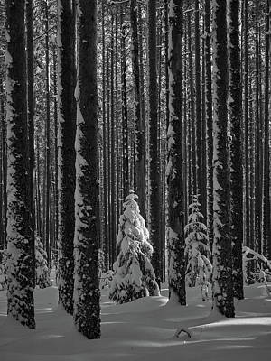 Photograph - When The Light Falls Bw by Jouko Lehto