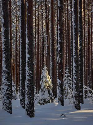 Photograph - When The Light Falls by Jouko Lehto