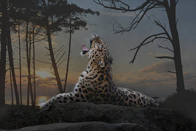 Felidae Photograph - When The Night Comes by Joachim G Pinkawa