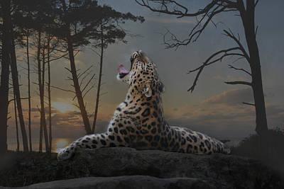 Animals Photos - When The Night Comes by Joachim G Pinkawa
