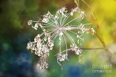 Photograph - When The Summer Has Gone by Jutta Maria Pusl