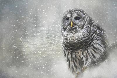 Photograph - When Winter Calls Owl Art by Jai Johnson