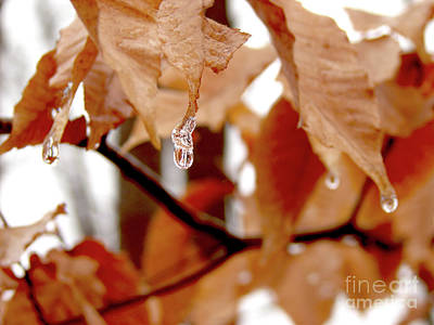 Photograph - When Winter Leaves by Laura Brightwood