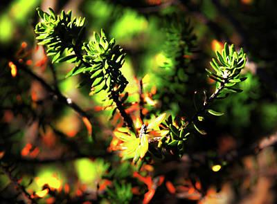 Photograph - When Yellow Leaves Are Falling by Miroslava Jurcik