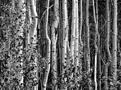 Photograph - Where by David Gilbert