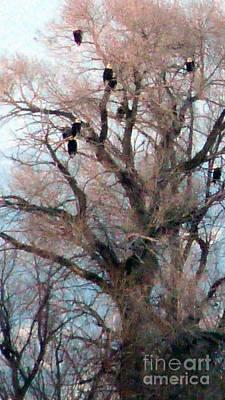 Photograph - Where Eagles Dare by David Bearden