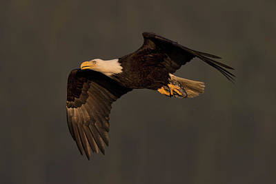 Photograph - Where Eagles Dare by Scott Warner