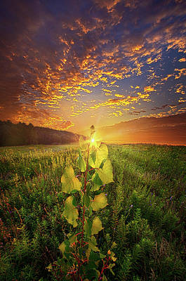 Photograph - Where Nothing Else Matters by Phil Koch