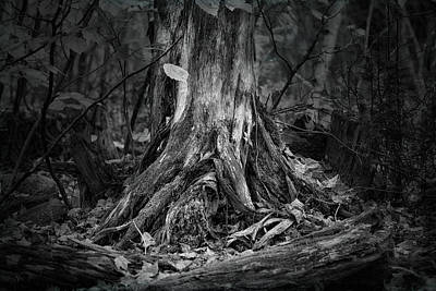 Photograph - Where Roots Run Deep by Susan Capuano