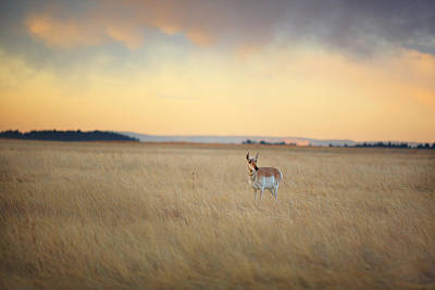 Photograph - Where The Antelope Play by Deborah Johnson