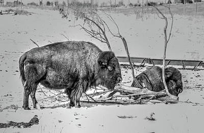 Photograph - Where The Buffalo Rest by J Laughlin