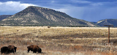 Photograph - Where The Buffalo Roam by Anjanette Douglas