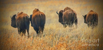 Photograph - Where The Buffalo Roam by Elizabeth Winter