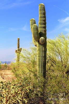 Photograph - Where The Cactus Grow In The Desert by John Rizzuto