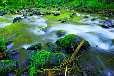 Forest Floor Photograph - Where The Golden Waters Flow by Jeff Swan