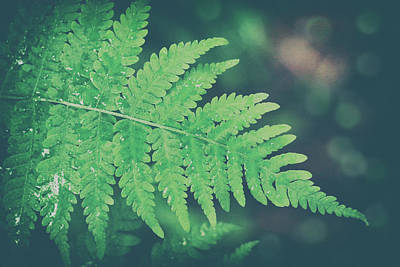 Photograph - Where The Green Fern Grows by Iryna Goodall