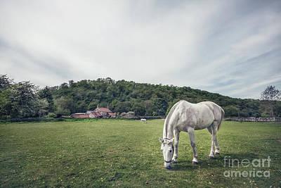 Animals Photos - Where The Green Grass Grows by Evelina Kremsdorf