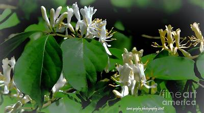 Photograph - Where The Honeysuckle Blooms by Tami Quigley