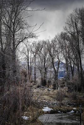 Photograph - Where The Moose Roam by Belinda Greb