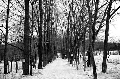 Photograph - Where The Path Leads In Winter by John Rizzuto