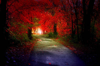 Photograph - Where This Autumn Path Takes You by Tara Turner