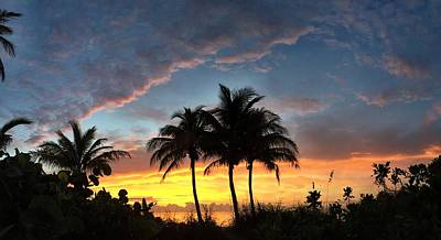 Photograph - Where Three Palms Wait. by Andrew Royston