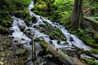 Photograph - Where Water Flows Clean And Cool by Margaret Pitcher