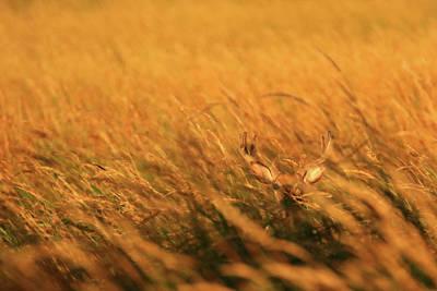 Photograph - Wheres Waldo by Brook Burling