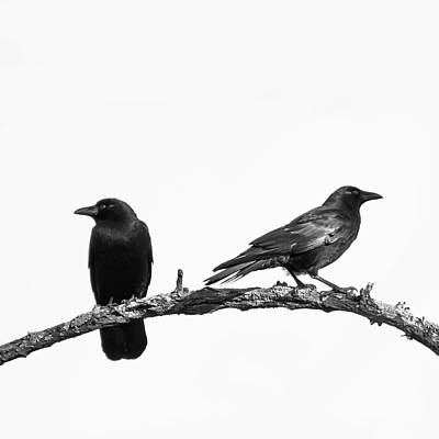 Crow Photograph - Which Way Two Black Crows On White Square by Terry DeLuco