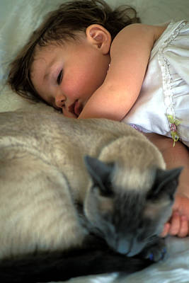 Print Cat Photograph - While Baby Sleeps by Kathy Yates