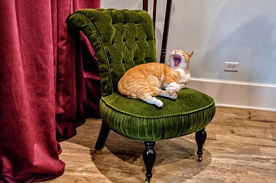 Photograph - Whillett Cat  by Joseph Caban