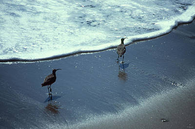 Animals Royalty-Free and Rights-Managed Images - Whimbrel by Soli Deo Gloria Wilderness And Wildlife Photography