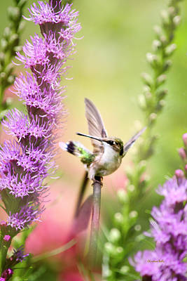 Photograph - Whimsical Hummingbird by Christina Rollo
