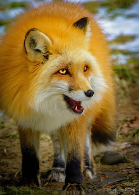 Photograph - Whimsical Red Fox by LeeAnn McLaneGoetz McLaneGoetzStudioLLCcom