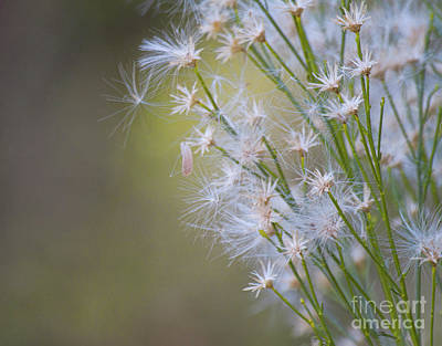 Photograph - Whimsical Weeds by Ruth Jolly