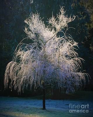Ice On Branch Photograph - Whimsical Winter Willow by Teresa A Lang