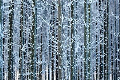 Pine Trees Photograph - Whimsical Winters by Roeselien Raimond