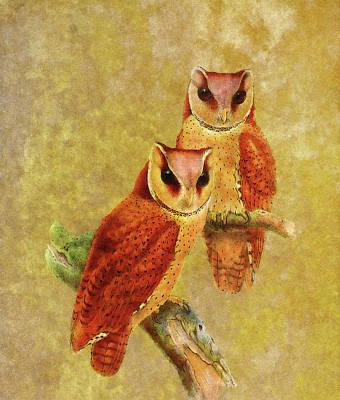 Digital Art - Whimsical Wisdom by Georgiana Romanovna