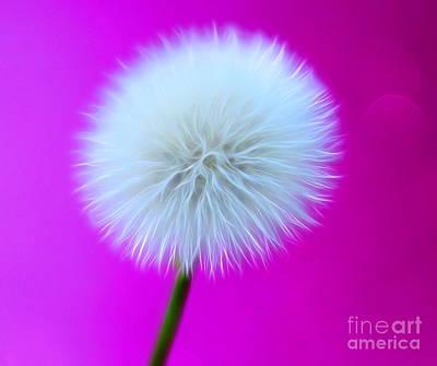 Floral Digital Art Digital Art - Whimsy Wishes by Krissy Katsimbras