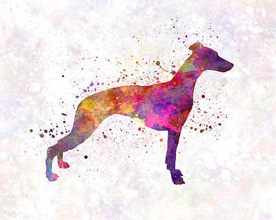 Whippet Painting - Whippet In Watercolor by Pablo Romero