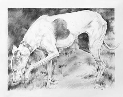Whippet Painting - Whippet Searching by Derrick Higgins