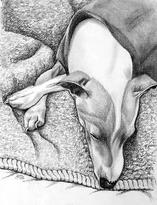 Susan Conner Drawing - Whippet by Susan Conner