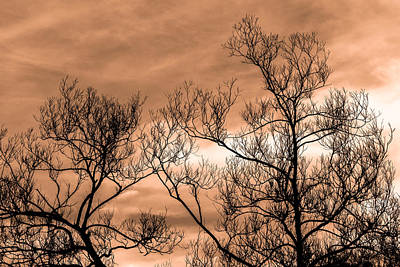 Photograph - Whisper In The Trees by Bob Orsillo