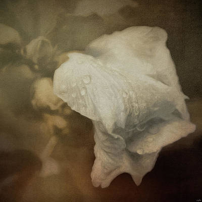 Photograph - Whisper Of White by Jai Johnson