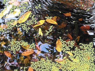 Photograph - Whisper Pond by Strangefire Art       Scylla Liscombe